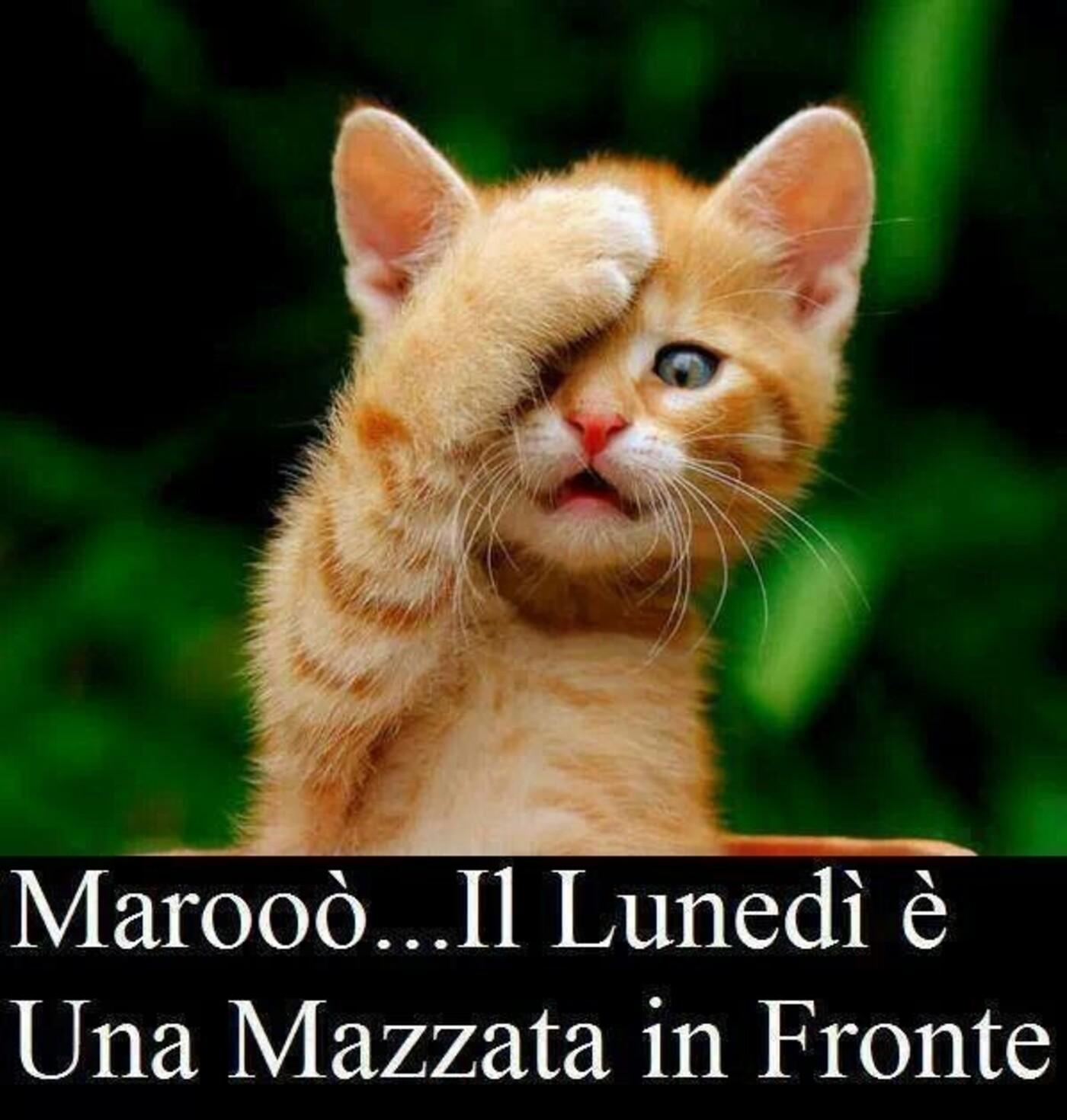 Marooò... il Lunedì è una mazzata in fronte !