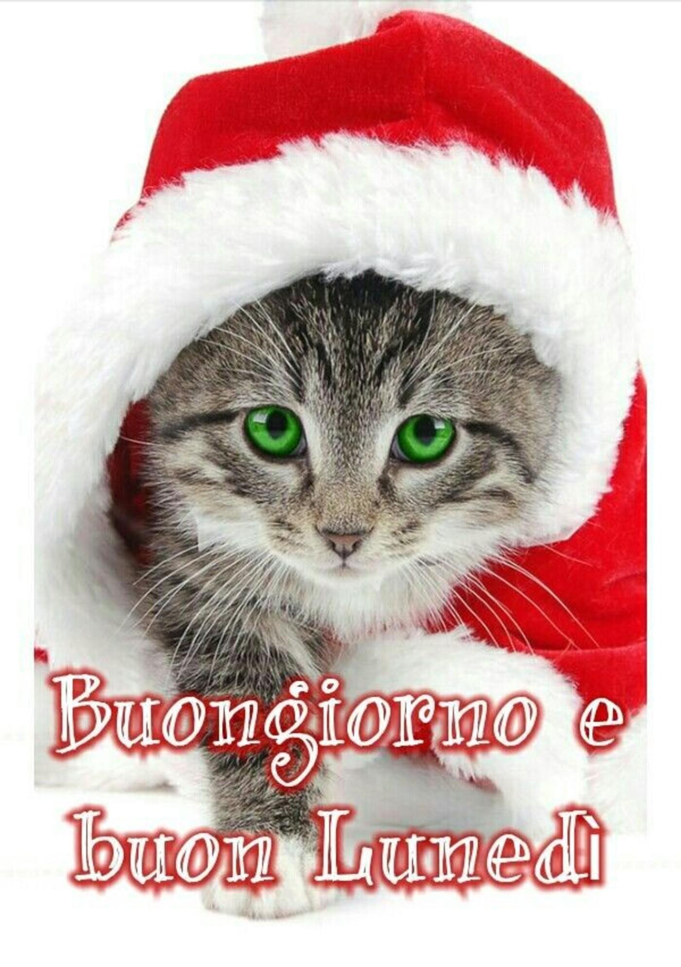 Buongiorno e Buon Lunedì immagini natalizie