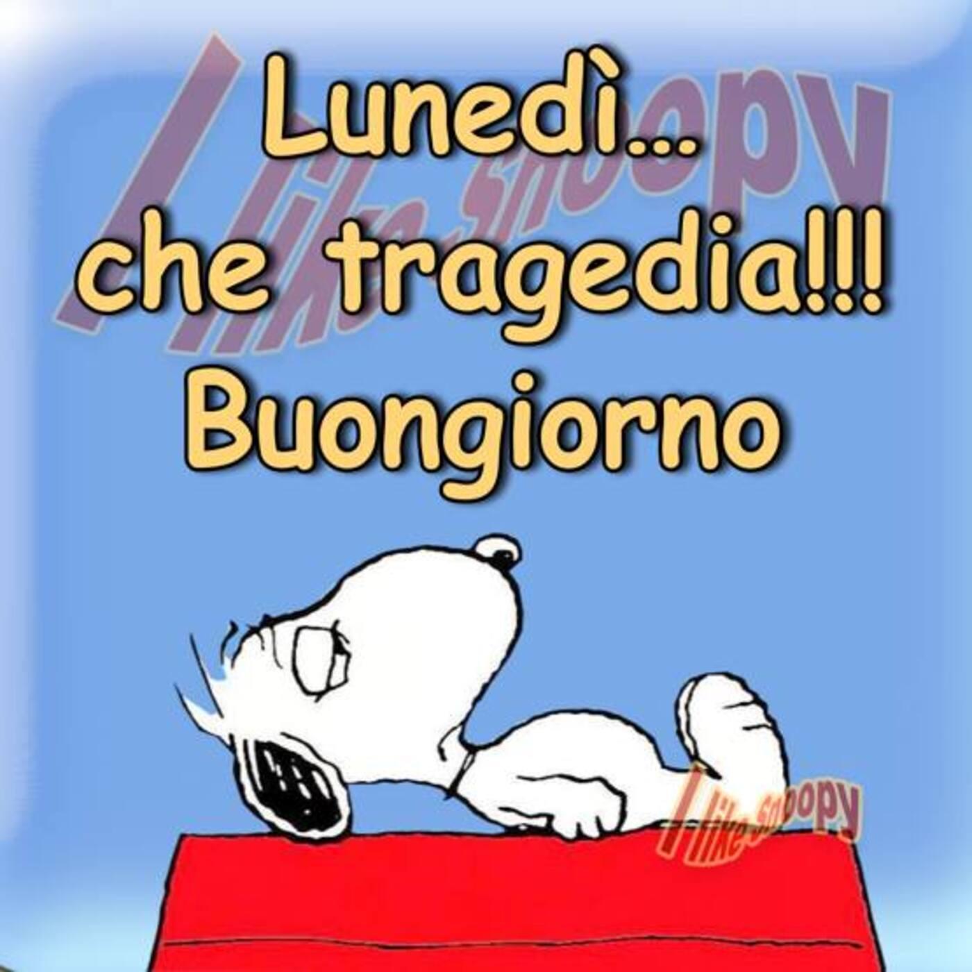 Lunedì... che tragedia!!! Buongiorno (Snoopy)