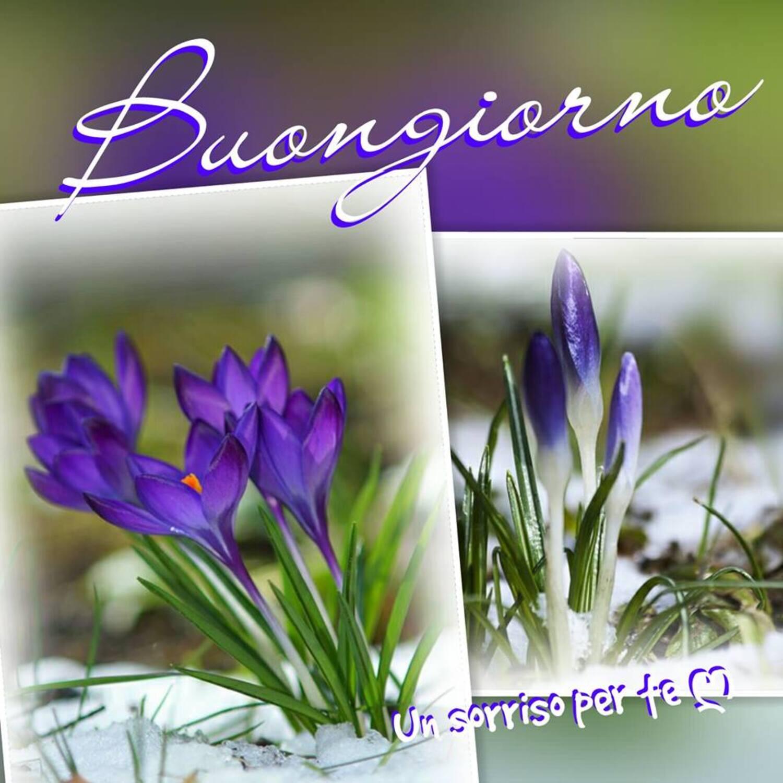 Buongiorno foto coi fiori