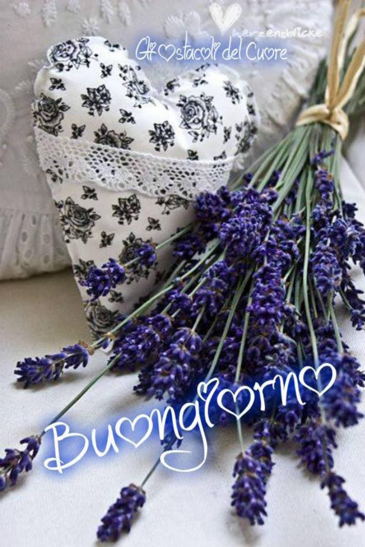 Buongiorno fiori di lavanda