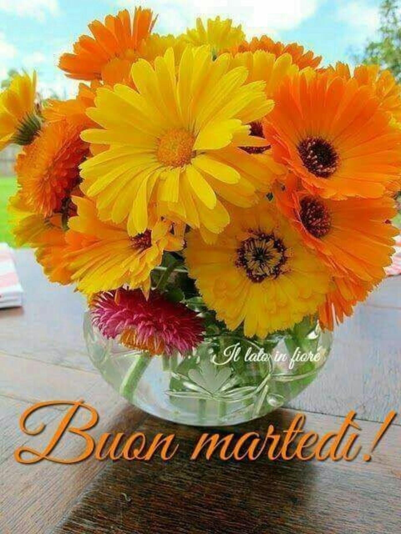 Buon Martedì fiori