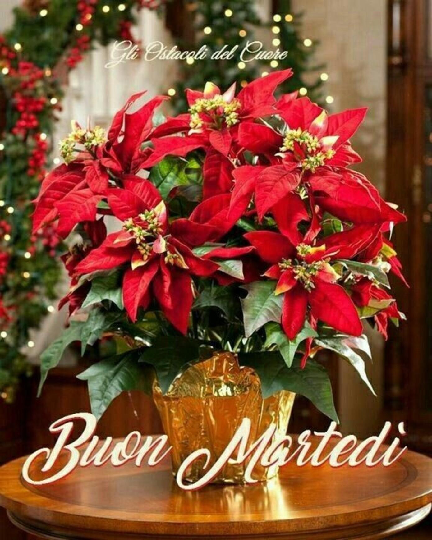 Buon Martedì x periodo natalizio