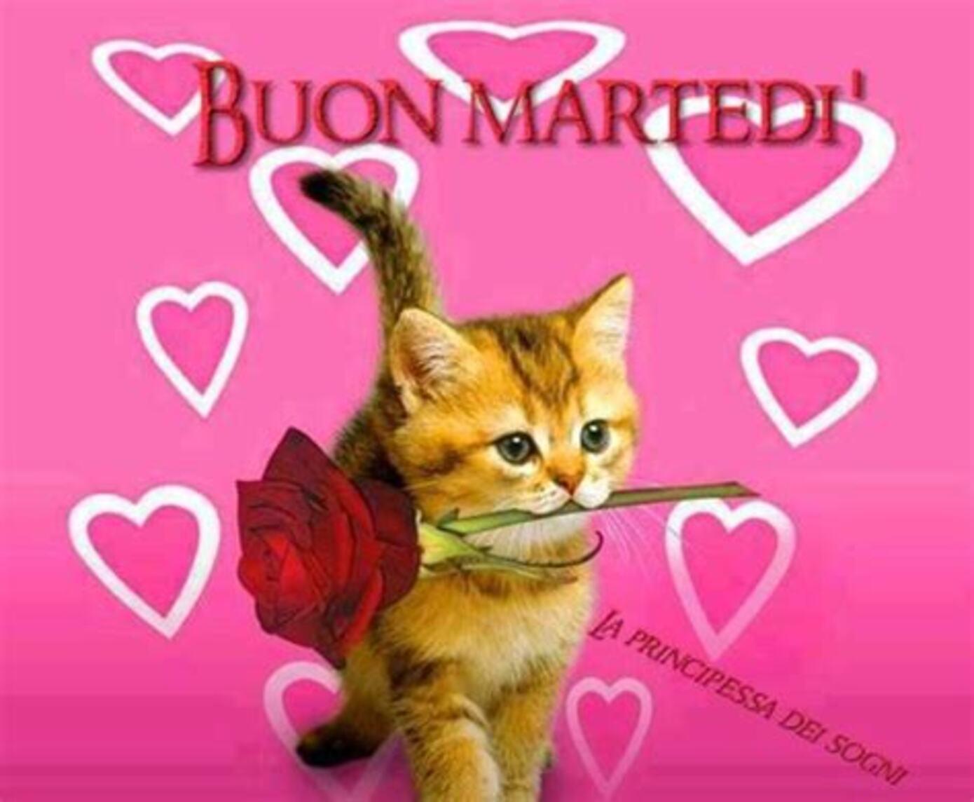 Buon Martedì Amore Mio