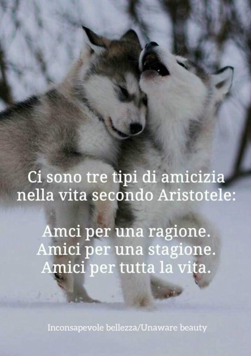 Ci sono tre tipi di amicizia nella vita secondo Aristotele: Amici per una ragione. Amici per una stagione. Amici per tutta la vita.