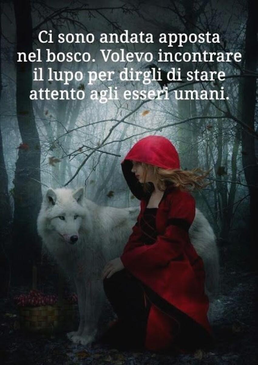 Ci sono andata apposta nel bosco. Volevo incontrare il lupo per dirgli di stare attento agli esseri umani.