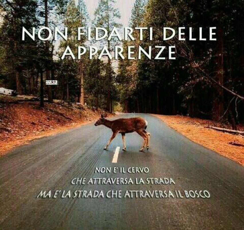 Non fidarti delle apparenze...non è il cervo che attraversa la stanza ma è la strada che attraversa il bosco