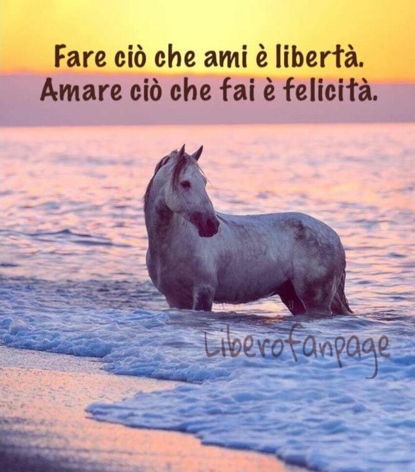 Fare ciò che ami è libertà. Amare ciò che fai è felicità