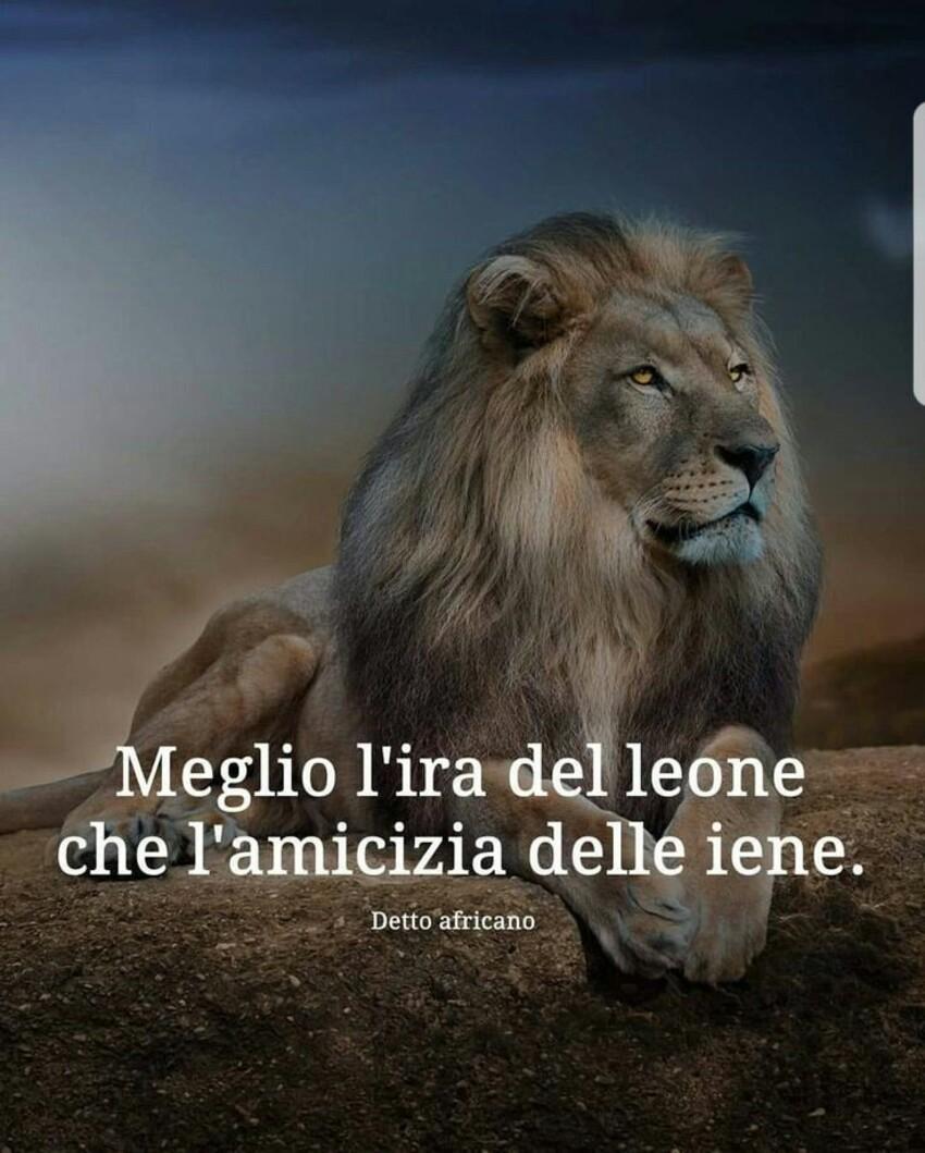 Meglio l'ira del leone che l'amicizia delle iene