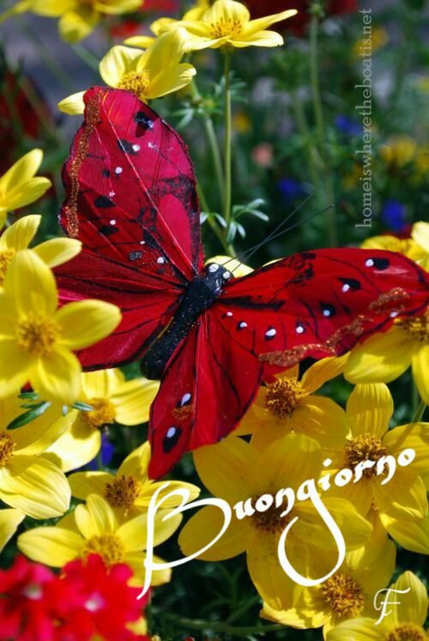 Buongiorno con una farfalla posata su dei fiori gialli