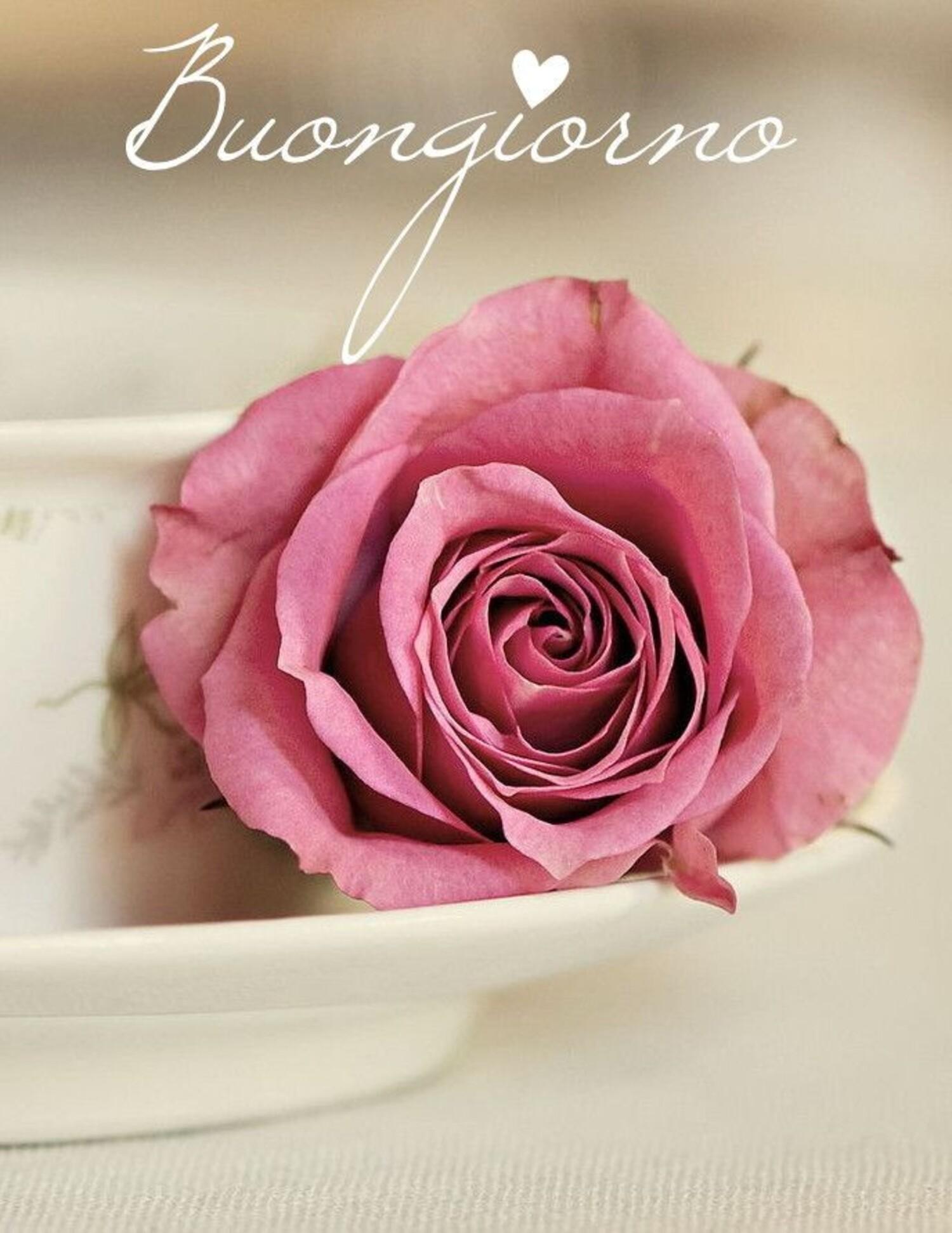 Buongiorno con una rosa