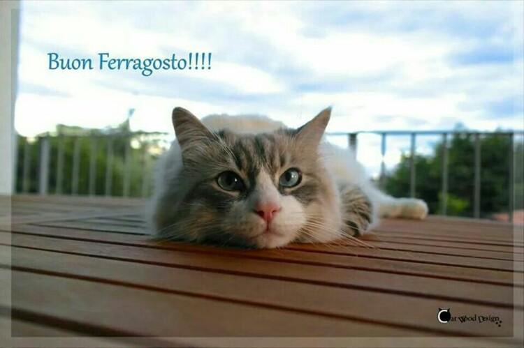 Buon Ferragosto !!!!