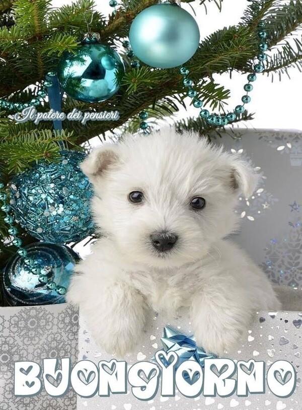 Buon Giorno con l'albero di Natale